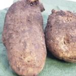 自然薯(じねんじょ)レシピ