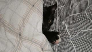 baby-cat-653885