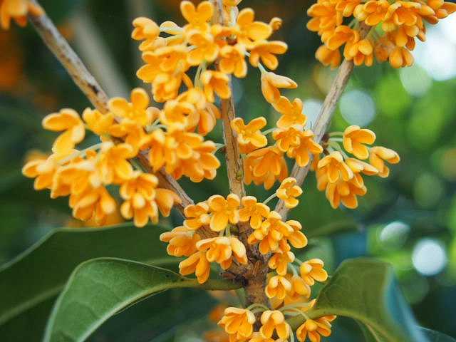 fragrant (4)