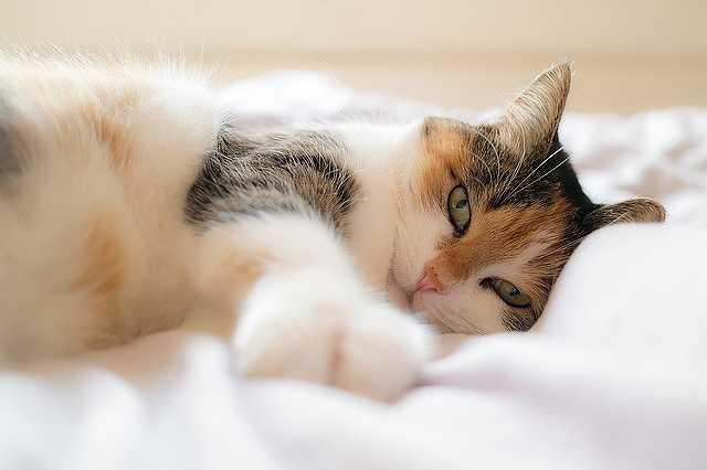 cat-1058095