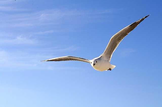gull-456727