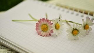 notebook-1405303