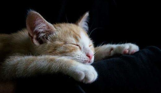 cat-1056661