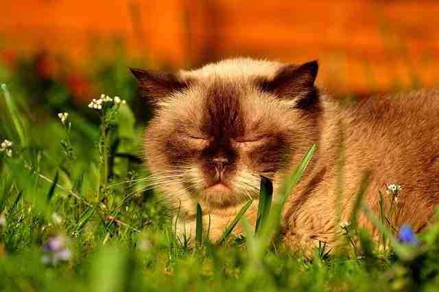 cat-2288694