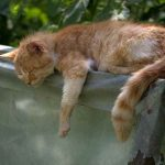 睡眠時間を増やして能率を上げるという考え