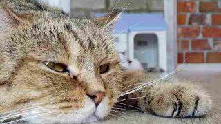 cat-2488258