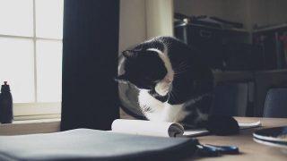 cat-2557294