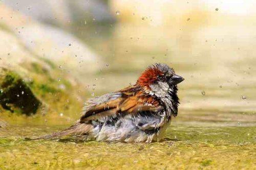 sparrow-1908357