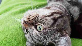 cat-2725996