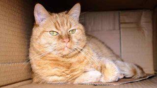 cat-1999679