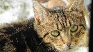 cat-2897065