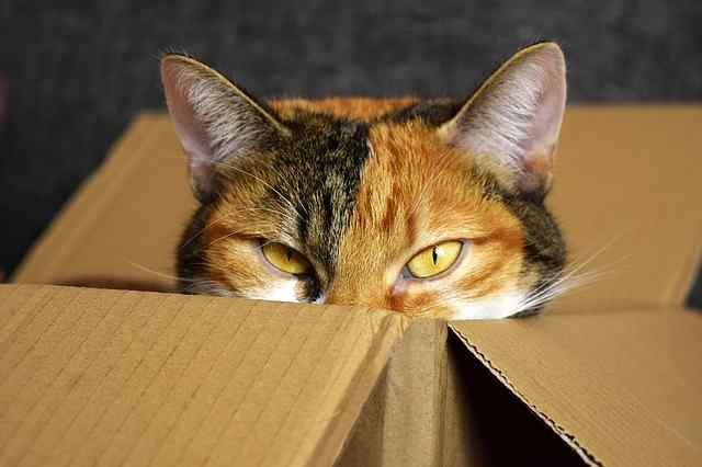 lucky-cat-2780044