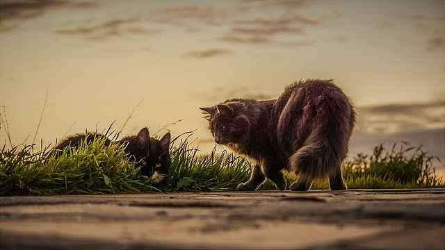 cats-3061372