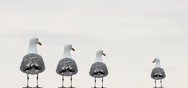 gulls-2662550