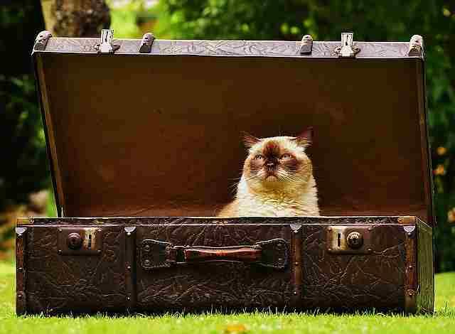 luggage-1643010