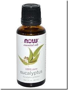 eucalyptus1402.jpg