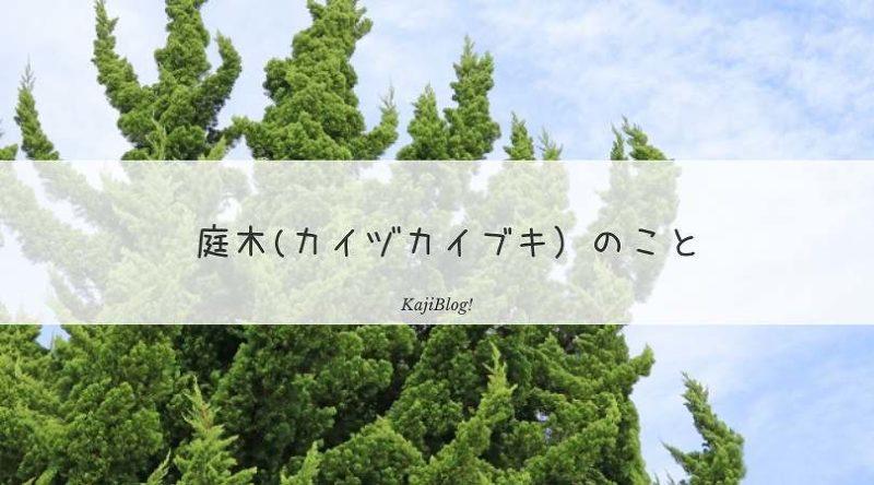 kaizukaibukinokoto